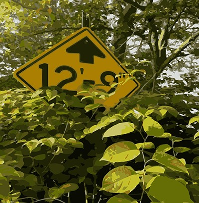 Japanese knotweed covering up a traffic sign