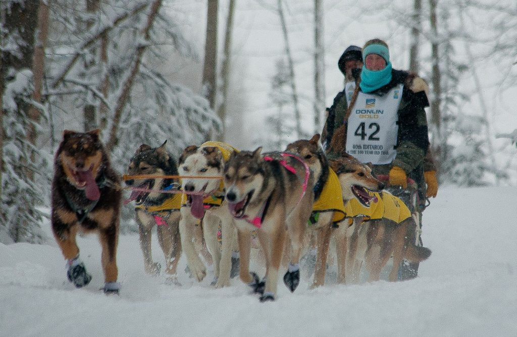 Colleen Robertia off on her second Iditarod Trail Race.