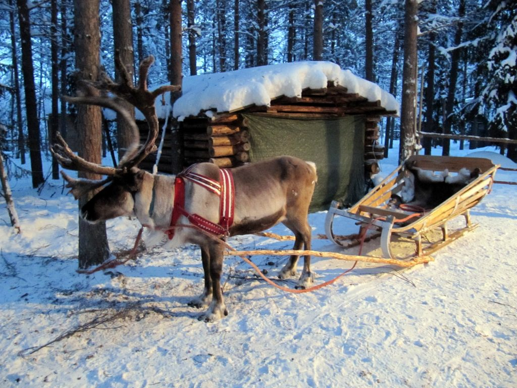 Reindeer sled in Lapland, Finland