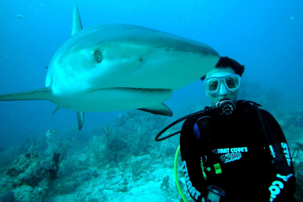 Shark poses with geared-up diver