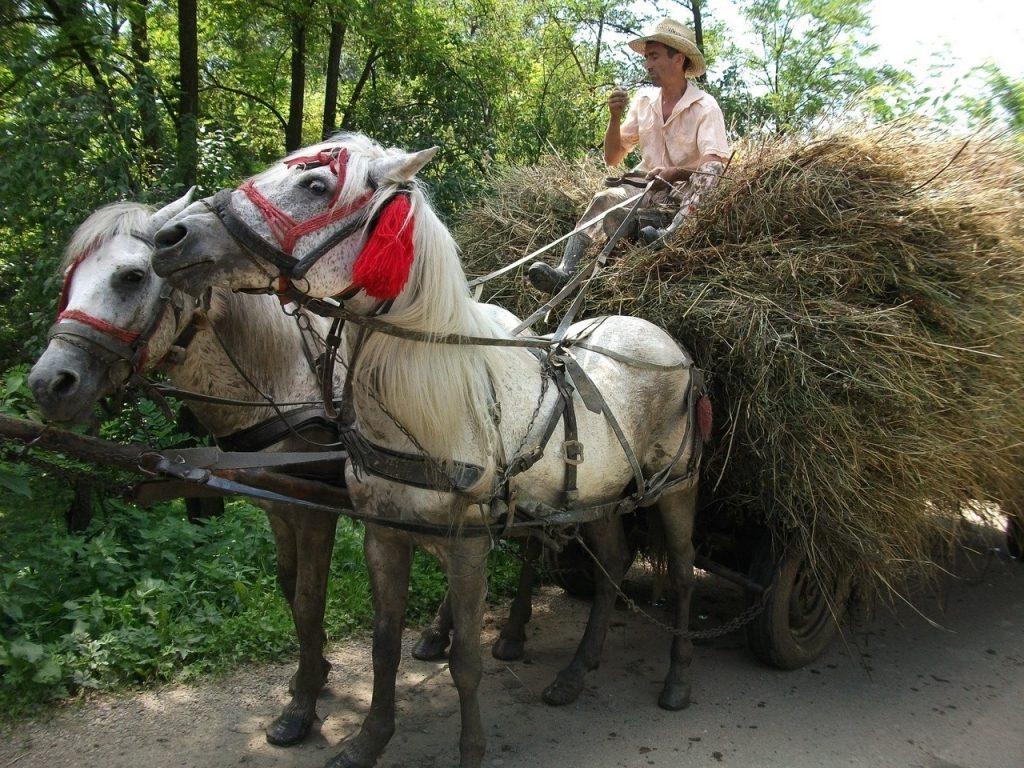 Horses pulling a cart