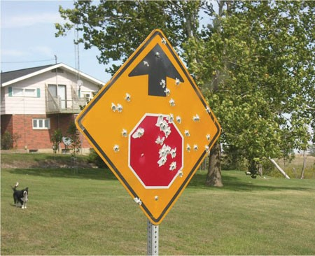 "Stop sign ahead"" sign with gunshot damage"