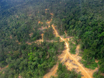 Aerial photo used to illustrate illegal logging
